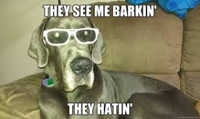 Great Dane They Hatin | Humor Hound via Relatably.com