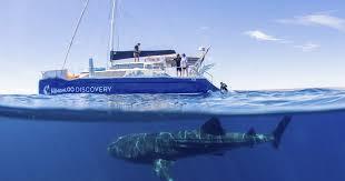 Ningaloo Whale <b>Shark</b> Swim by <b>Sailing</b> Catamaran from Exmouth ...