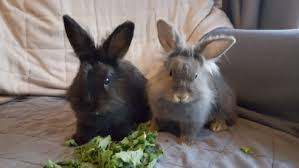 International Rabbit Day: Abandoned bunnies looking for homes in ...