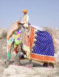 <b>Фестиваль слонов</b> в <b>Индии</b> – фотографии самых нарядных ...