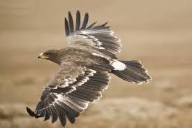 Image result for malheur national wildlife refuge