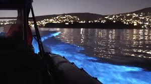 'Glowing' dolphins <b>light</b> up California <b>ocean</b> in video | The ...
