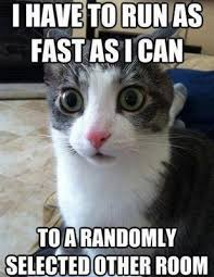 funny cat meme with a wide-eyed cat looking directly at you and ... via Relatably.com