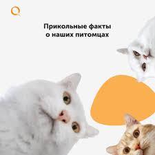 QIWI Kazakhstan - Posts   Facebook