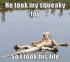 He Took My Squeaky Toy So I Took His Life- Meme | WeKnowMemes via Relatably.com