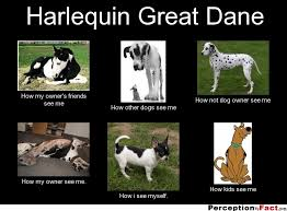 Harlequin Great Dane... - What people think I do, what I really do ... via Relatably.com