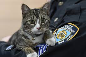 this kitten is the nypd s friskiest officer new york post