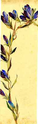 best ideas about renaissance artists renaissance watercolor gentian by alice ravenel huger smith a charleston renaissance artist charleston