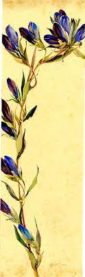 best ideas about renaissance artists renaissance watercolor gentian by alice ravenel huger smith a charleston renaissance artist charleston