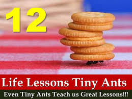 12 Life Lessons From Tiny Ants