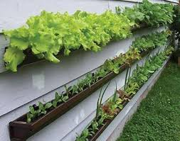 Image result for container gardening
