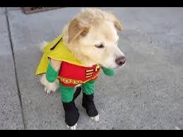Смешные <b>собаки в костюмах</b>. Подборка Топ 7 - YouTube