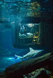 essay about life under water merkaj life under stalin essay u host full