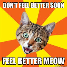 Don't Feel Better Soon Cat Meme - Cat Planet | Cat Planet via Relatably.com