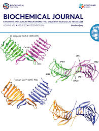 home biochemical journal structure of the c terminal part of c elegans cyclase associated protein cas 2 top was modeled as a dimer based on the structure of the c terminal part