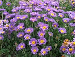 Risultati immagini per settembrini fiori
