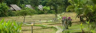 <b>Fern</b> Resort - EcoTourism Resort for Nature Lovers