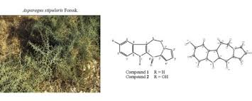 Two new alkaloids from Asparagus stipularis Forssk. roots ...