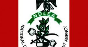 Image result for ndlea chairman