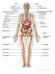 nervous and respiratory systems work together essay body systems human body pictures organs