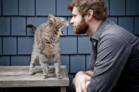 """Képtalálat a következőre: """"macska pasi"""""""