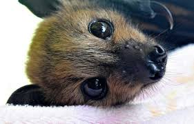 Image result for happy bats