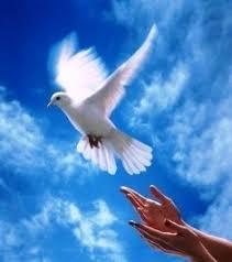 Resultado de imagem para imagem paz perfeita