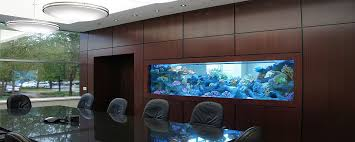 the aquarium holds well over 1000 gallons 3785 liters and houses all different spices of marine fish aquarium office 1000 images