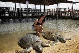 Image result for wisata pulau bali