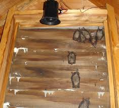 Bat Guys   The Suburban Bat HouseBats love gable vents