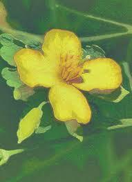 лекарственных растениях, широко используемых в Новых ...