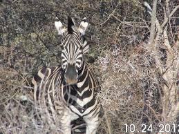Essay writing zebra     FAMU Online