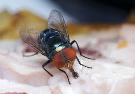 Shocking facts about Electric Fly <b>Killers</b> - deBugged