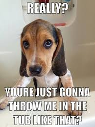 Funny beagle picture/ quote | Dog quotes | Pinterest | Beagles ... via Relatably.com