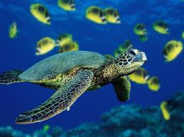 Resultat d'imatges de imagenes animales marinos