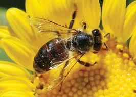 arti mimpi dikerumuni lebah, arti mimpi dikerubungi lebah, arti mimpi membunuh lebah, arti mimpi diserang lebah, arti mimpi melihat lebah, arti mimpi dikejar lebah, arti mimpi digigit lebah, arti mimpi disengat lebah, arti mimpi lebah madu