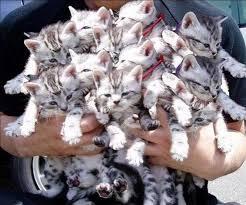 Картинки по запросу Много кошек