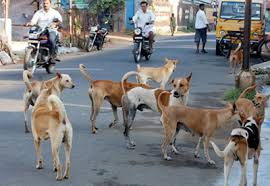Image result for street dogs fight