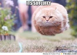 ITS SO FLUFFY... - Furball Cat Meme Generator Captionator via Relatably.com