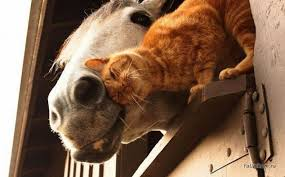 Image result for animals in love