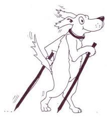 Bildergebnis für nordic walking mit hund