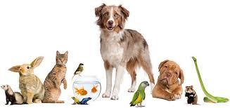 """Τι είναι το """" κοινοβούλιο των πτηνών"""" ;"""