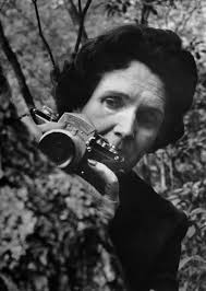 rachel carson s biophilic legacy biophiliccities fifty years ago this month rachel carson published her groundbreaking book silent spring arguably the book that launched the modern environmental