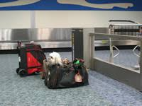 Airline <b>Pet</b> Travel: <b>Clearing</b> Airport Checkpoint Security - <b>Pet</b> Travel ...