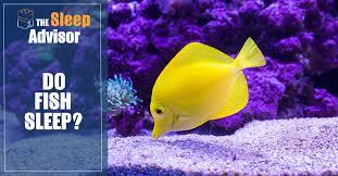 How Do <b>Fish Sleep</b>?   <b>Sleep</b> Advisor