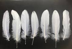 Small <b>Gold Tipped White</b> Feathers 1-4 cm - Great for Weddings ...