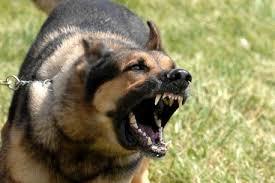 El peor de los casos!:Que pasa si te quiere matar un perro!