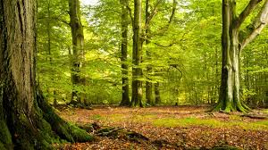 """Résultat de recherche d'images pour """"images forêt"""""""