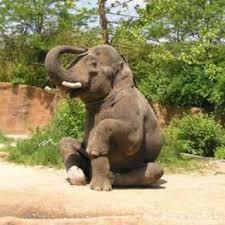 Bildresultat för yoga pose elephant