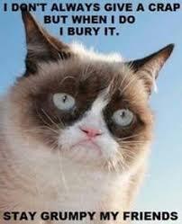 GRUMPY CAT on Pinterest | Grumpy Cat Meme, Grumpy Cat Quotes and ... via Relatably.com